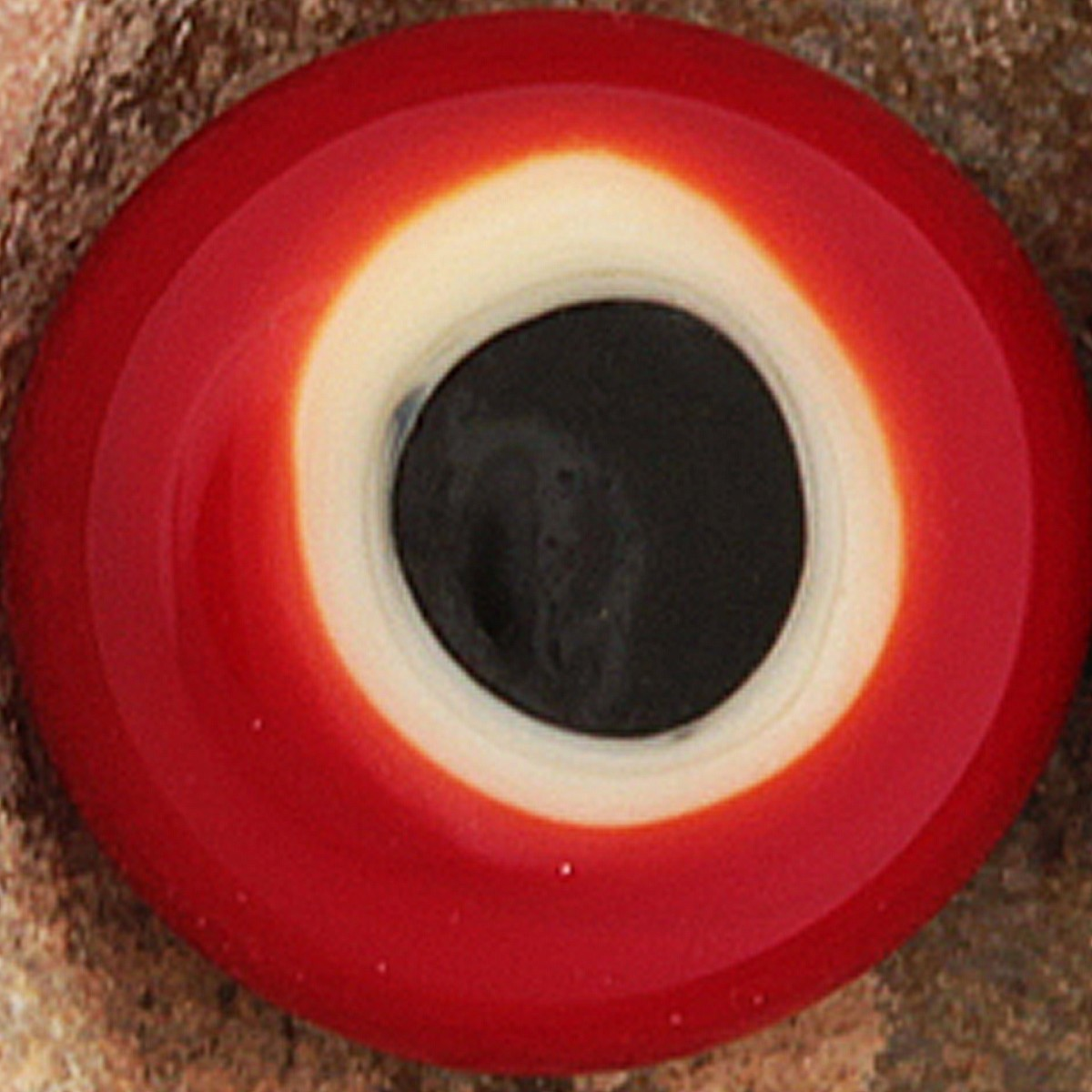 rojo claro, con punto marfil claro y negro superpuestos
